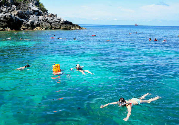 blackcoral snorkeling - Snorkel Daytrip